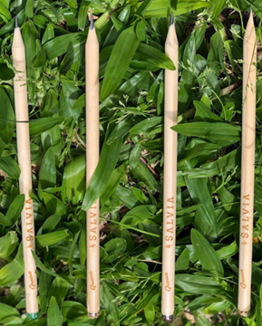 Imagen de Lápices plantables - SALVIA
